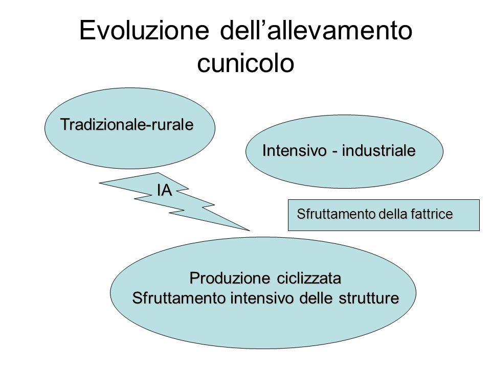 Evoluzione dellallevamento cunicolo Tradizionale-rurale Intensivo - industriale Sfruttamento della fattrice IA Produzione ciclizzata Sfruttamento inte