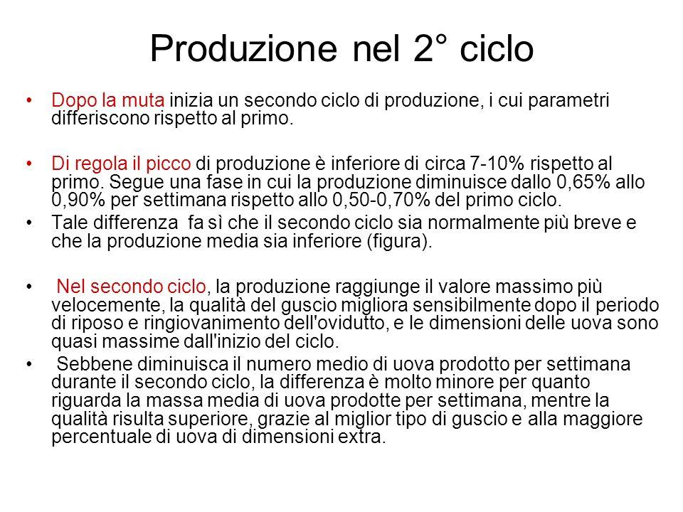 Produzione nel 2° ciclo Dopo la muta inizia un secondo ciclo di produzione, i cui parametri differiscono rispetto al primo. Di regola il picco di prod