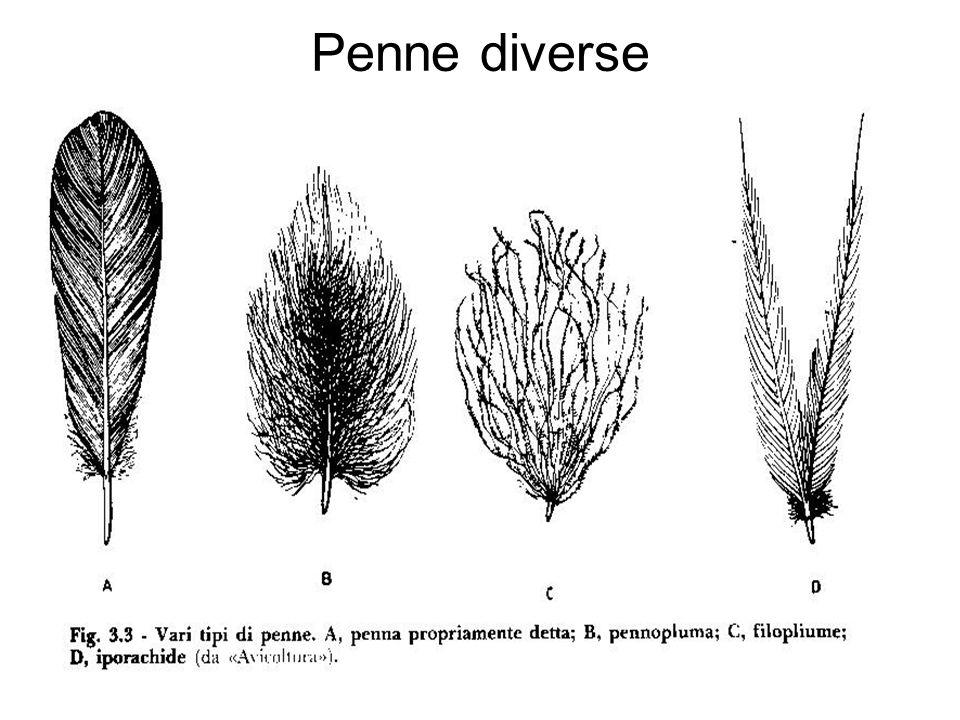 Penne diverse