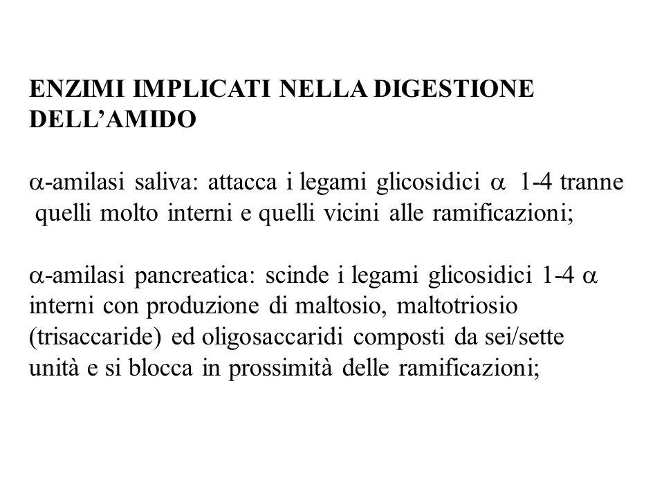 ENZIMI IMPLICATI NELLA DIGESTIONE DELLAMIDO -amilasi saliva: attacca i legami glicosidici 1-4 tranne quelli molto interni e quelli vicini alle ramificazioni; -amilasi pancreatica: scinde i legami glicosidici 1-4 interni con produzione di maltosio, maltotriosio (trisaccaride) ed oligosaccaridi composti da sei/sette unità e si blocca in prossimità delle ramificazioni;
