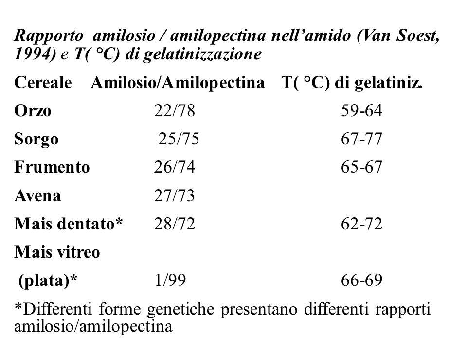 Rapporto amilosio / amilopectina nellamido (Van Soest, 1994) e T( °C) di gelatinizzazione Cereale Amilosio/Amilopectina T( °C) di gelatiniz.