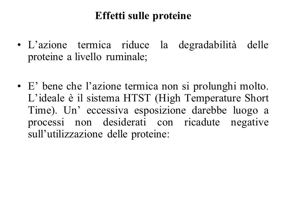 Effetti sulle proteine Lazione termica riduce la degradabilità delle proteine a livello ruminale; E bene che lazione termica non si prolunghi molto.