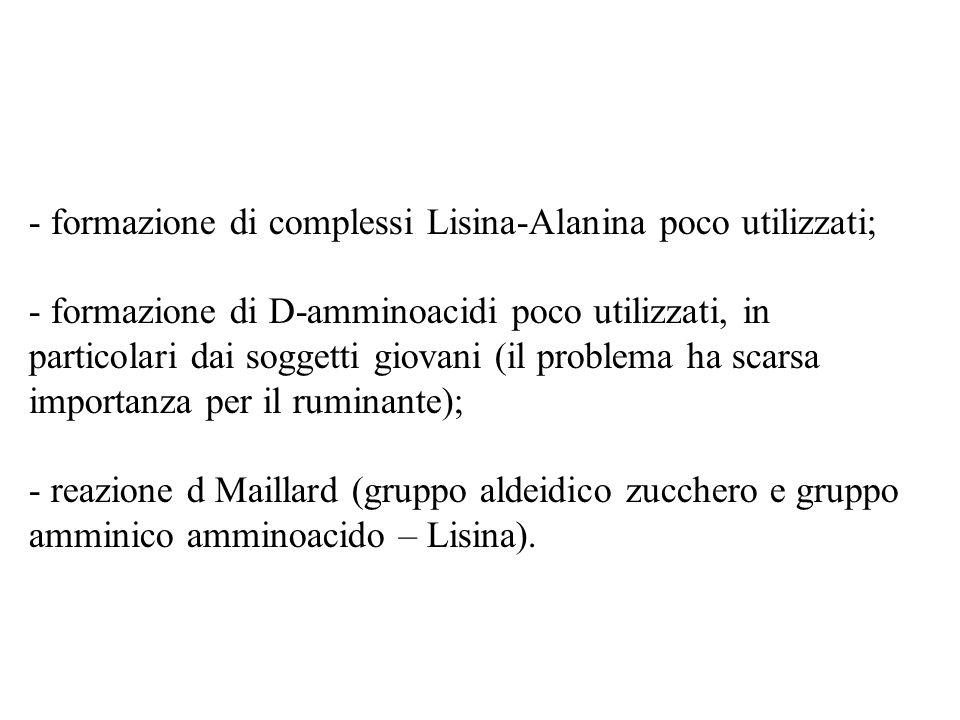- formazione di complessi Lisina-Alanina poco utilizzati; - formazione di D-amminoacidi poco utilizzati, in particolari dai soggetti giovani (il problema ha scarsa importanza per il ruminante); - reazione d Maillard (gruppo aldeidico zucchero e gruppo amminico amminoacido – Lisina).