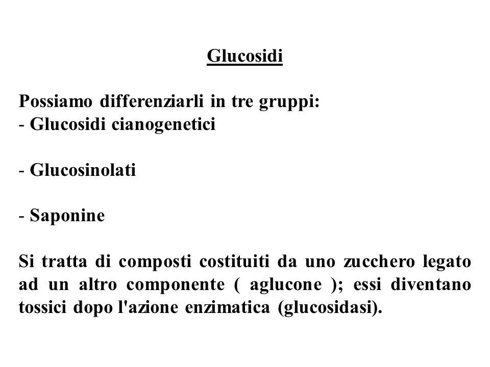 Glucosidi Possiamo differenziarli in tre gruppi: - Glucosidi cianogenetici - Glucosinolati - Saponine Si tratta di composti costituiti da uno zucchero legato ad un altro componente ( aglucone ); essi diventano tossici dopo l azione enzimatica (glucosidasi).