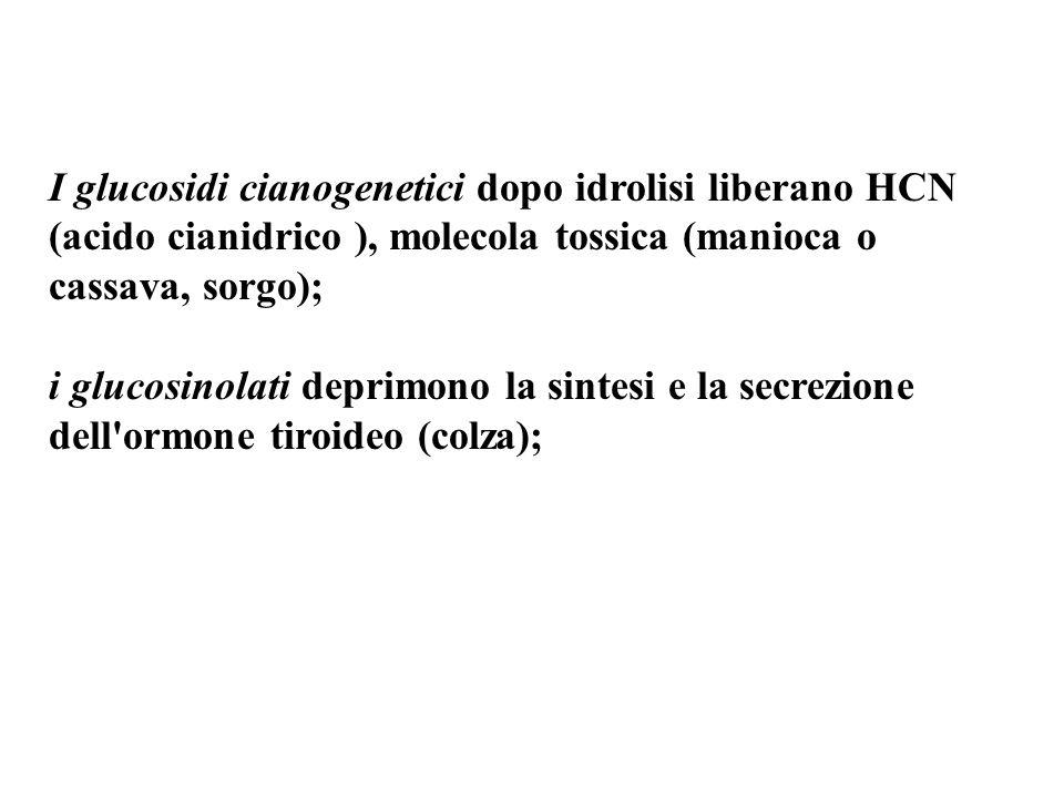 I glucosidi cianogenetici dopo idrolisi liberano HCN (acido cianidrico ), molecola tossica (manioca o cassava, sorgo); i glucosinolati deprimono la sintesi e la secrezione dell ormone tiroideo (colza);