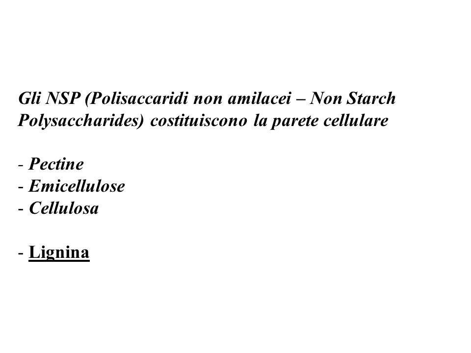 Gli NSP (Polisaccaridi non amilacei – Non Starch Polysaccharides) costituiscono la parete cellulare - Pectine - Emicellulose - Cellulosa - Lignina