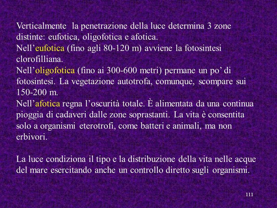 111 Verticalmente la penetrazione della luce determina 3 zone distinte: eufotica, oligofotica e afotica. Nelleufotica (fino agli 80-120 m) avviene la