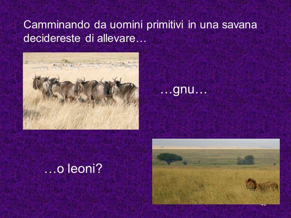 46 Camminando da uomini primitivi in una savana decidereste di allevare… …o leoni? …gnu…