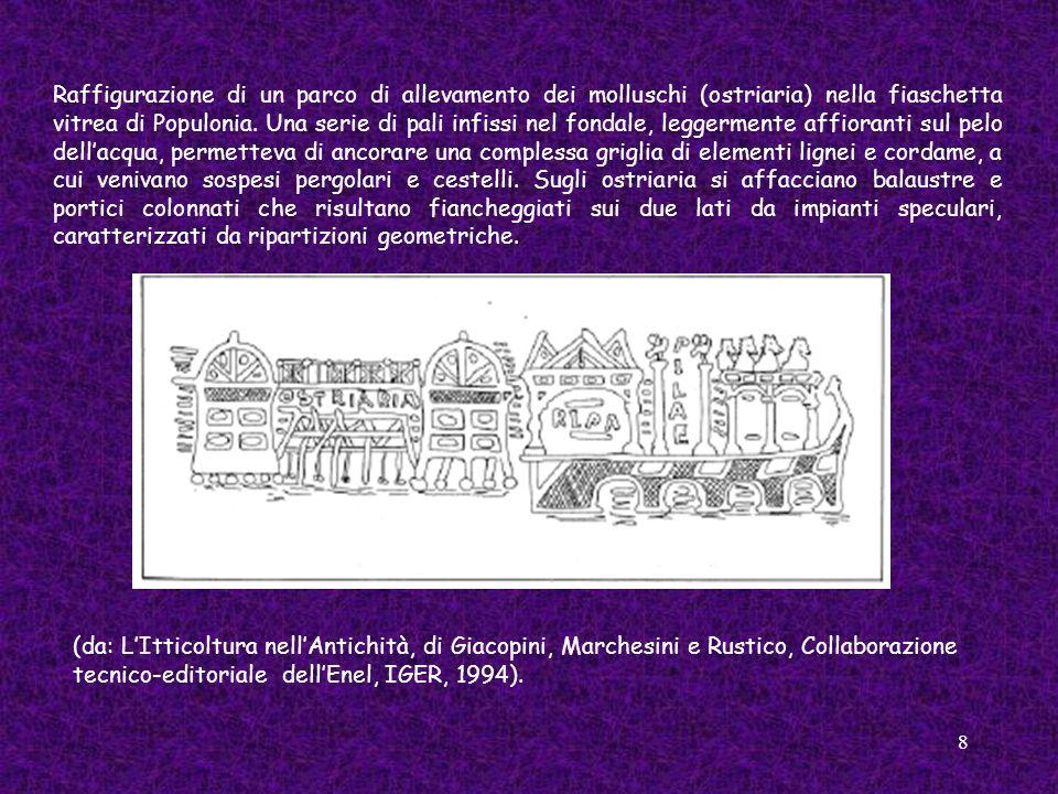8 Raffigurazione di un parco di allevamento dei molluschi (ostriaria) nella fiaschetta vitrea di Populonia. Una serie di pali infissi nel fondale, leg