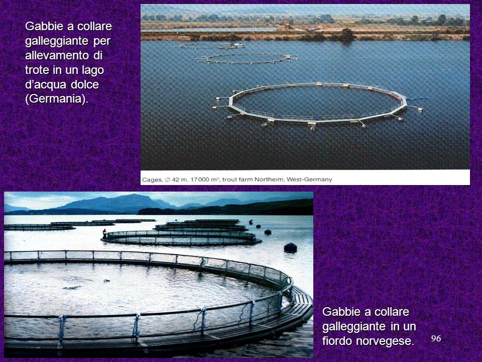 96 Gabbie a collare galleggiante per allevamento di trote in un lago dacqua dolce (Germania). Gabbie a collare galleggiante in un fiordo norvegese.