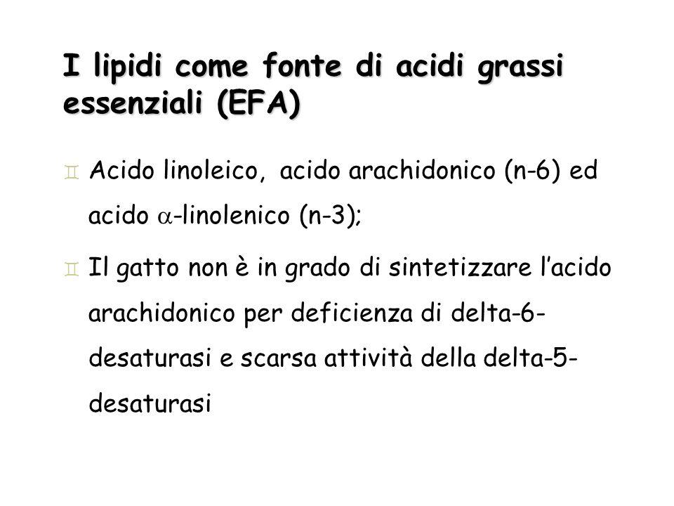 I lipidi come fonte di acidi grassi essenziali (EFA) ` Acido linoleico, acido arachidonico (n-6) ed acido -linolenico (n-3); ` Il gatto non è in grado