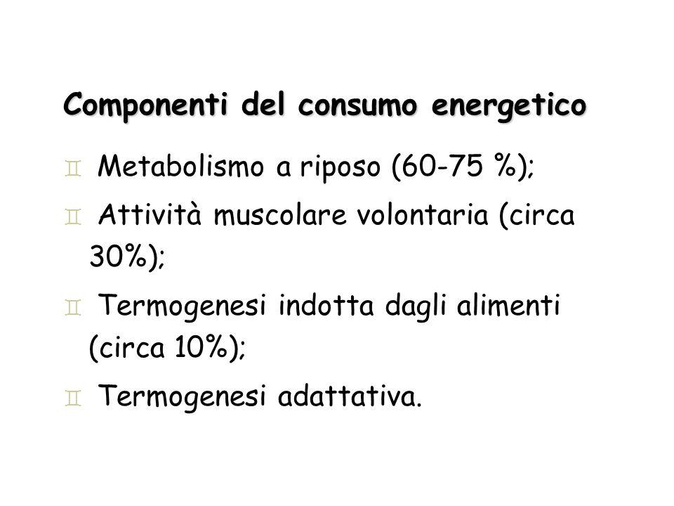 Componenti del consumo energetico ` Metabolismo a riposo (60-75 %); ` Attività muscolare volontaria (circa 30%); ` Termogenesi indotta dagli alimenti
