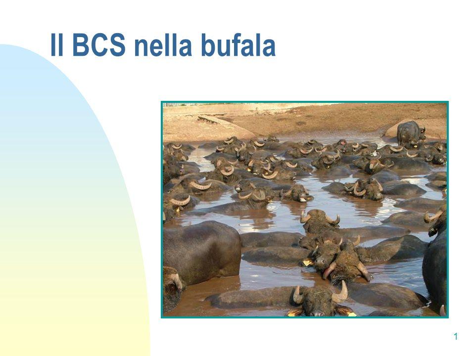 1 Il BCS nella bufala