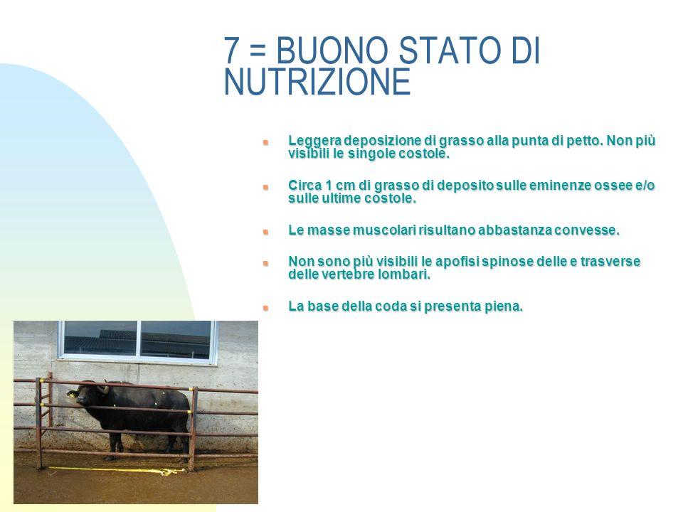 7 = BUONO STATO DI NUTRIZIONE Leggera deposizione di grasso alla punta di petto.