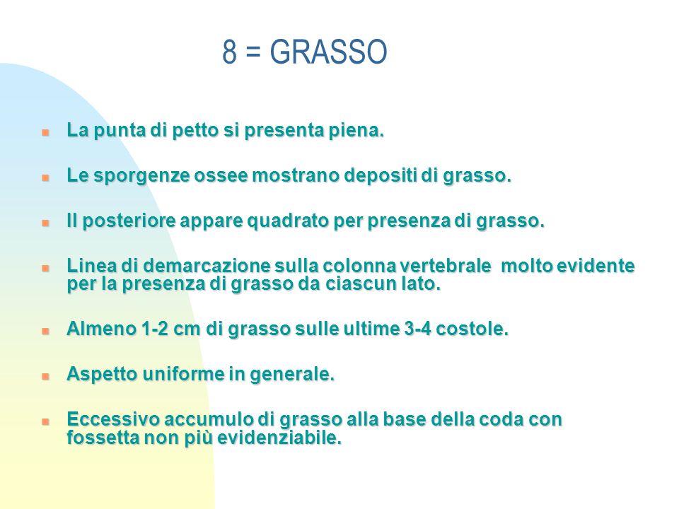 8 = GRASSO La punta di petto si presenta piena.La punta di petto si presenta piena.