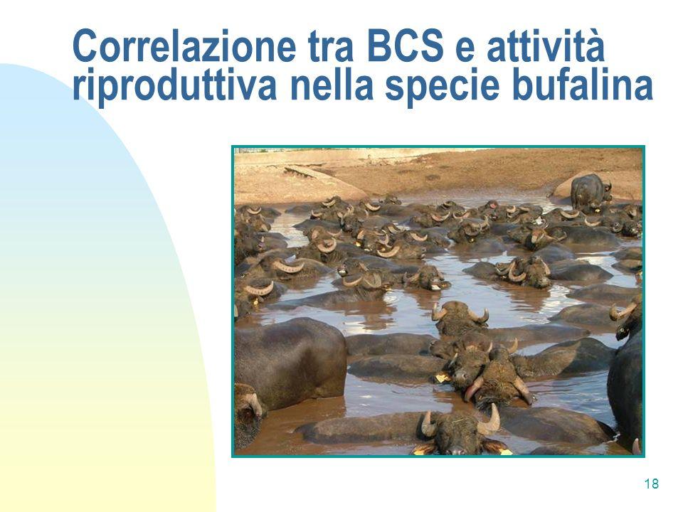 18 Correlazione tra BCS e attività riproduttiva nella specie bufalina
