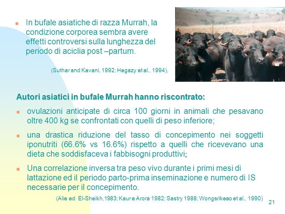 21 In bufale asiatiche di razza Murrah, la condizione corporea sembra avere effetti controversi sulla lunghezza del periodo di aciclia post –partum.