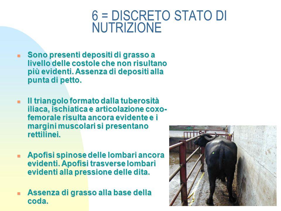 6 = DISCRETO STATO DI NUTRIZIONE Sono presenti depositi di grasso a livello delle costole che non risultano più evidenti.