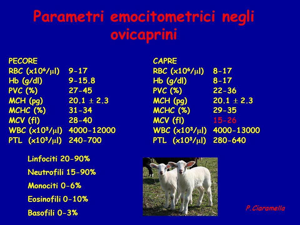 Parametri emocitometrici negli ovicaprini PECORE RBC (x10 6 / l) 9-17 Hb (g/dl)9-15.8 PVC (%)27-45 MCH (pg)20.1 2.3 MCHC (%)31-34 MCV (fl)28-40 WBC (x