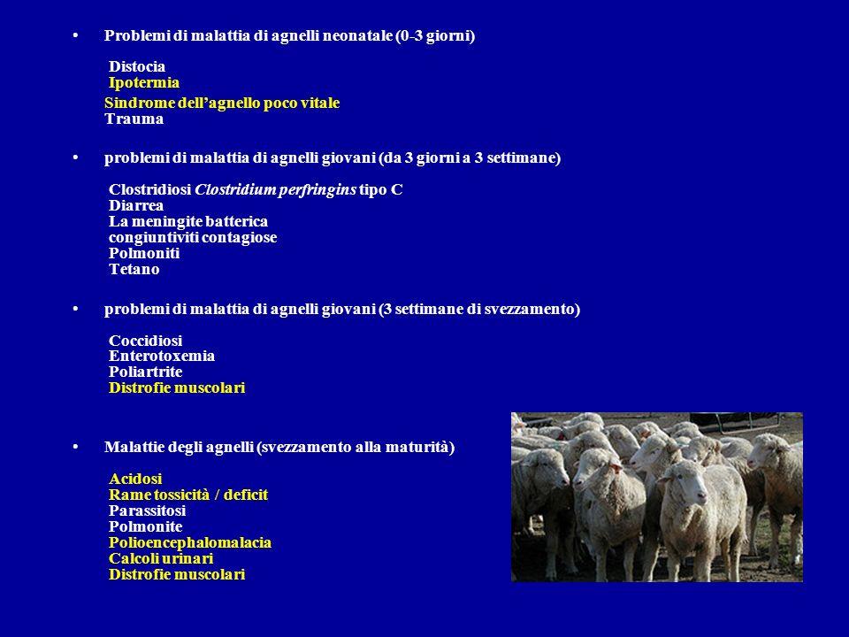 Problemi di malattia di agnelli neonatale (0-3 giorni) Distocia Ipotermia Sindrome dellagnello poco vitale Trauma problemi di malattia di agnelli giov