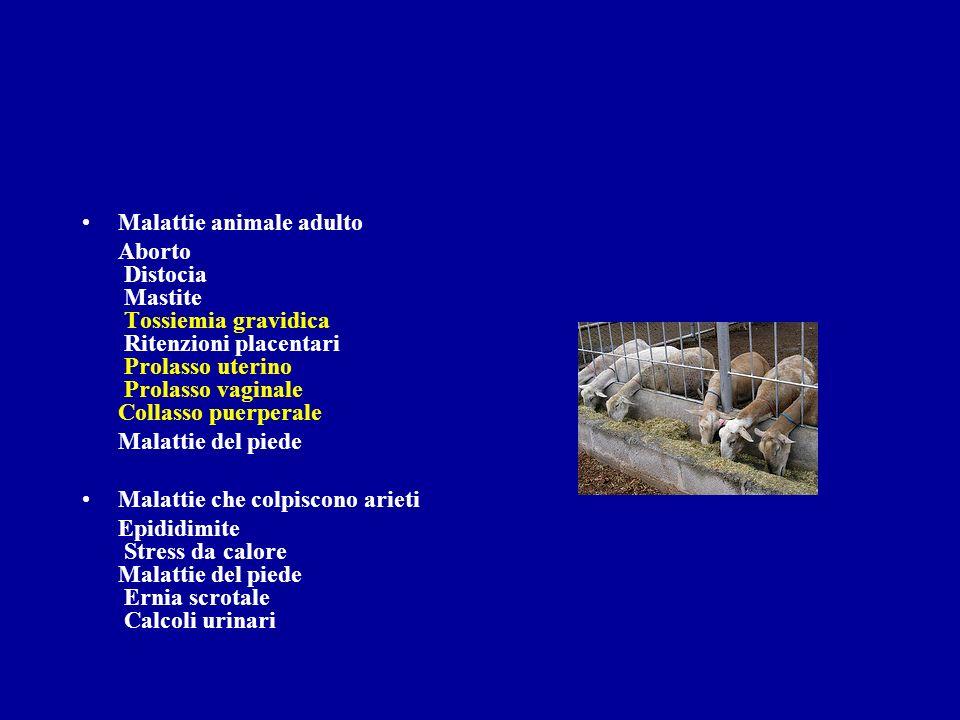 Malattie animale adulto Aborto Distocia Mastite Tossiemia gravidica Ritenzioni placentari Prolasso uterino Prolasso vaginale Collasso puerperale Malat