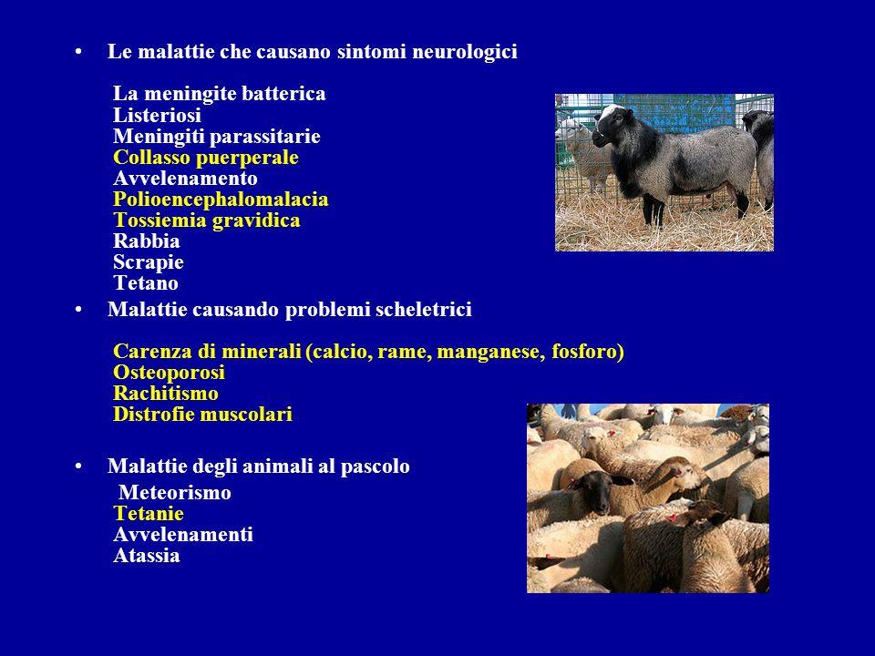 Le malattie che causano sintomi neurologici La meningite batterica Listeriosi Meningiti parassitarie Collasso puerperale Avvelenamento Polioencephalom