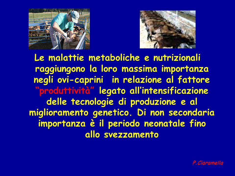 Le malattie metaboliche e nutrizionali raggiungono la loro massima importanza negli ovi-caprini in relazione al fattore produttività legato allintensi