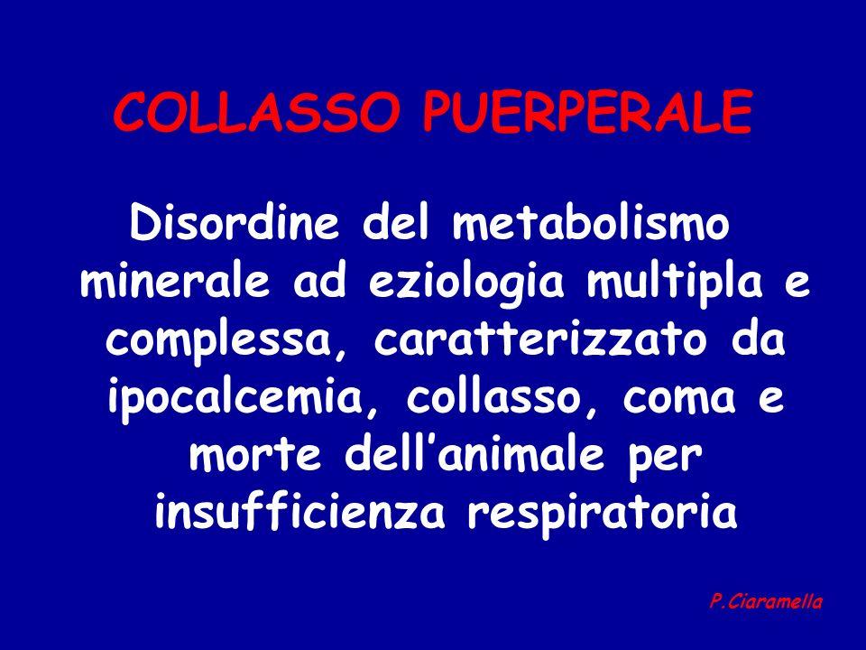 COLLASSO PUERPERALE Disordine del metabolismo minerale ad eziologia multipla e complessa, caratterizzato da ipocalcemia, collasso, coma e morte dellan