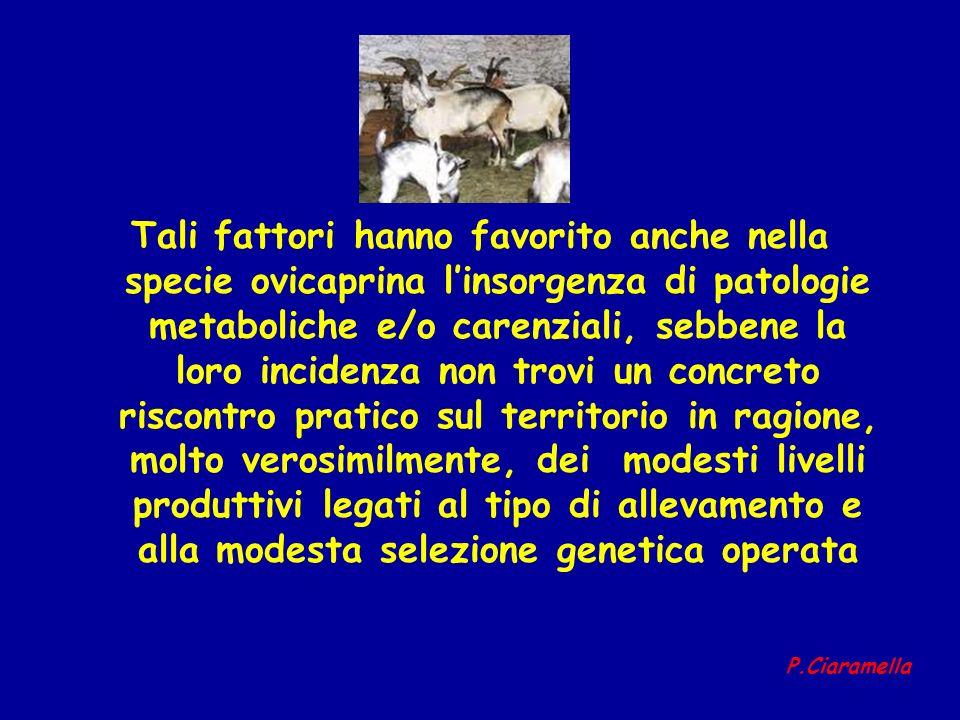 Tali fattori hanno favorito anche nella specie ovicaprina linsorgenza di patologie metaboliche e/o carenziali, sebbene la loro incidenza non trovi un