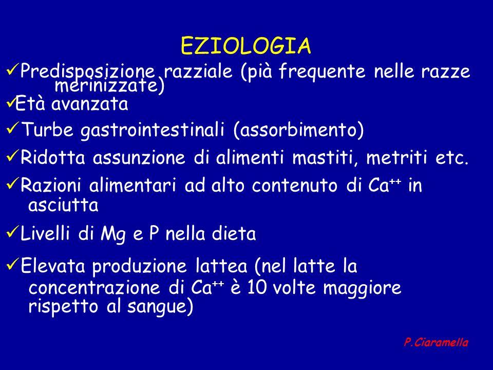 EZIOLOGIA Predisposizione razziale (pià frequente nelle razze merinizzate) Età avanzata Turbe gastrointestinali (assorbimento) Ridotta assunzione di a