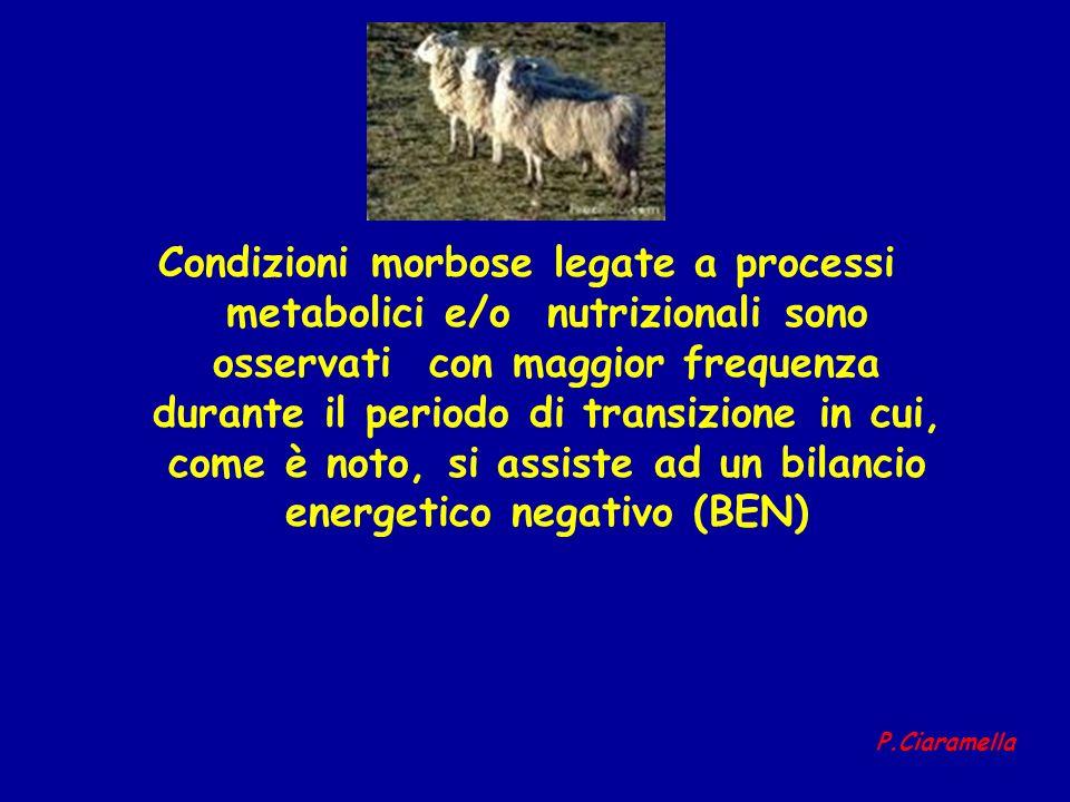 Condizioni morbose legate a processi metabolici e/o nutrizionali sono osservati con maggior frequenza durante il periodo di transizione in cui, come è