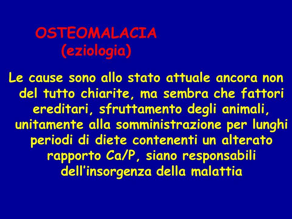 OSTEOMALACIA (eziologia) Le cause sono allo stato attuale ancora non del tutto chiarite, ma sembra che fattori ereditari, sfruttamento degli animali,