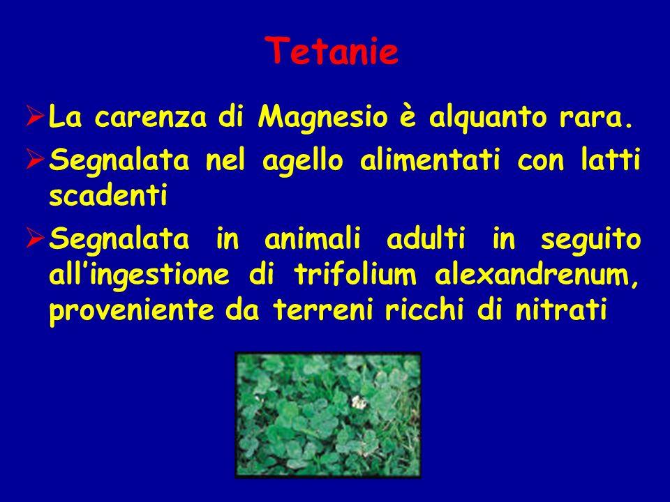 La carenza di Magnesio è alquanto rara. Segnalata nel agello alimentati con latti scadenti Segnalata in animali adulti in seguito allingestione di tri