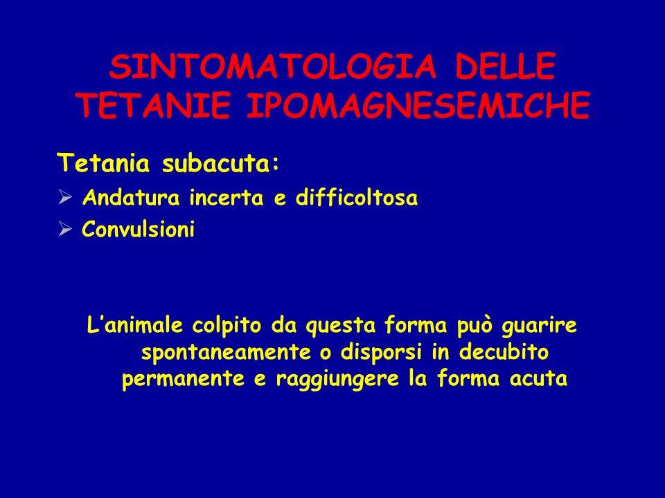 SINTOMATOLOGIA DELLE TETANIE IPOMAGNESEMICHE Tetania subacuta: Andatura incerta e difficoltosa Convulsioni Lanimale colpito da questa forma può guarir