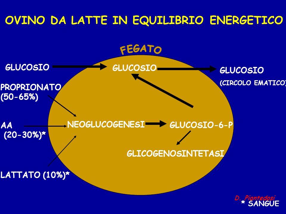 OVINO DA LATTE IN EQUILIBRIO ENERGETICO GLUCOSIO-6-P GLUCOSIO (CIRCOLO EMATICO) PROPRIONATO (50-65%) AA (20-30%)* LATTATO (10%)* NEOGLUCOGENESI GLICOG