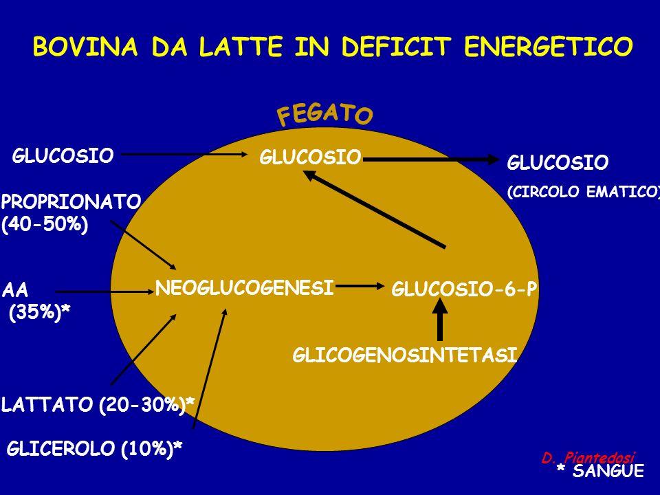 BOVINA DA LATTE IN DEFICIT ENERGETICO GLUCOSIO-6-P GLUCOSIO (CIRCOLO EMATICO) PROPRIONATO (40-50%) AA (35%)* LATTATO (20-30%)* NEOGLUCOGENESI GLICOGEN