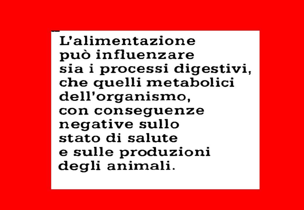 Ipomagnesiemia e produzioni zootecniche L ipomagnesiemia subclinica si associa ad una diminuita produzione di latte.
