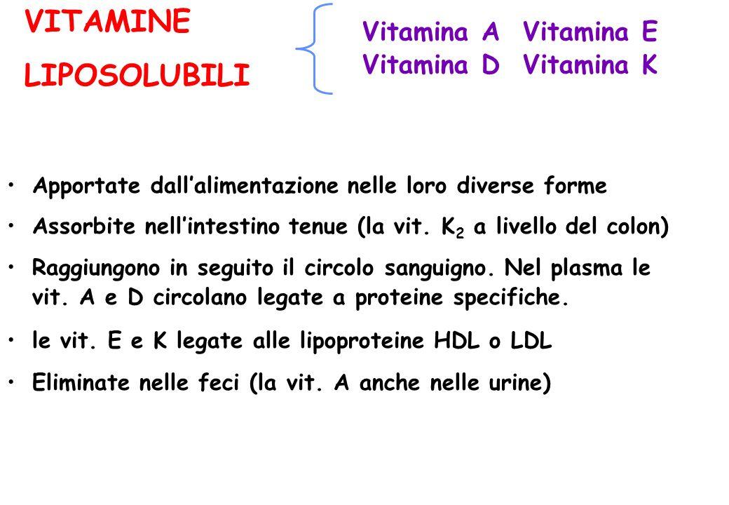 VITAMINE LIPOSOLUBILI Vitamina A Vitamina E Vitamina D Vitamina K Apportate dallalimentazione nelle loro diverse forme Assorbite nellintestino tenue (