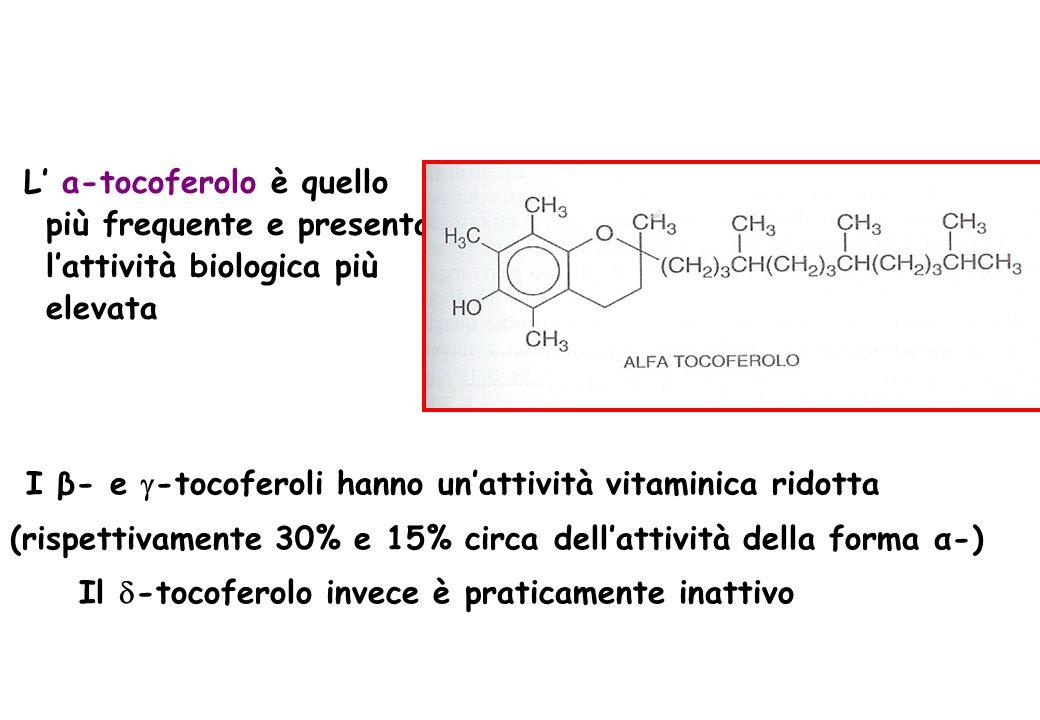 L a-tocoferolo è quello più frequente e presenta lattività biologica più elevata I β- e -tocoferoli hanno unattività vitaminica ridotta (rispettivamen