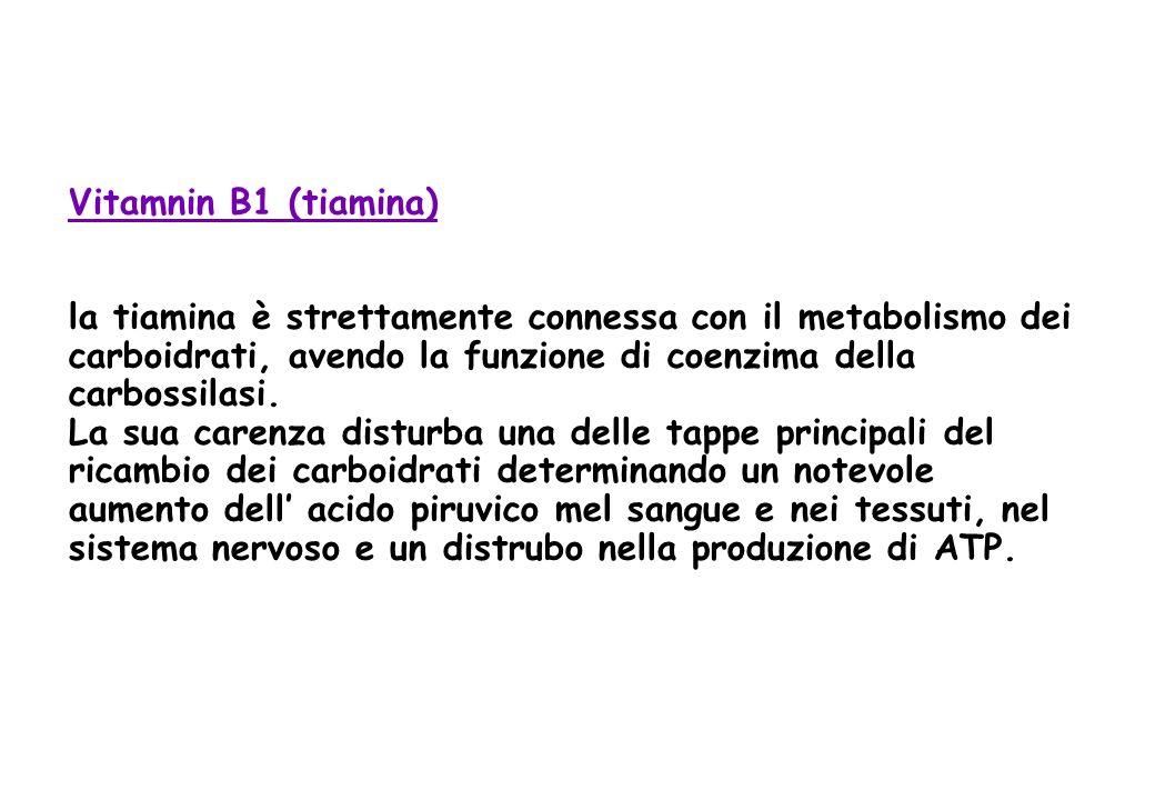 Vitamnin B1 (tiamina) la tiamina è strettamente connessa con il metabolismo dei carboidrati, avendo la funzione di coenzima della carbossilasi. La sua