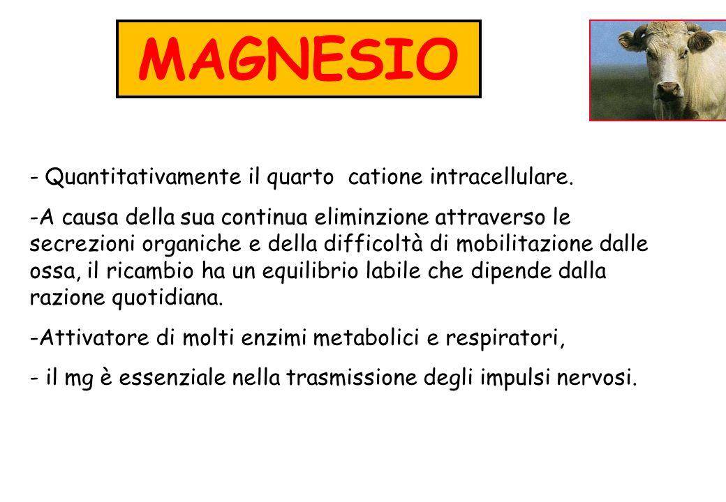 MAGNESIO - Quantitativamente il quarto catione intracellulare. -A causa della sua continua eliminzione attraverso le secrezioni organiche e della diff