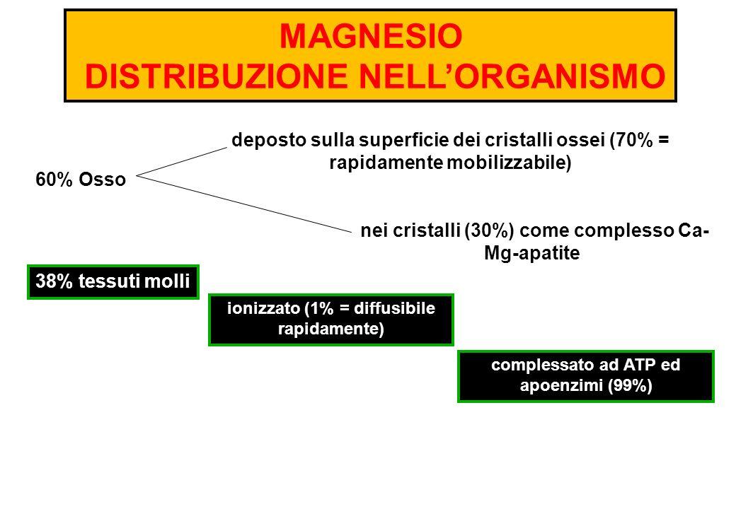 MAGNESIO DISTRIBUZIONE NELLORGANISMO nei cristalli (30%) come complesso Ca- Mg-apatite 60% Osso deposto sulla superficie dei cristalli ossei (70% = ra