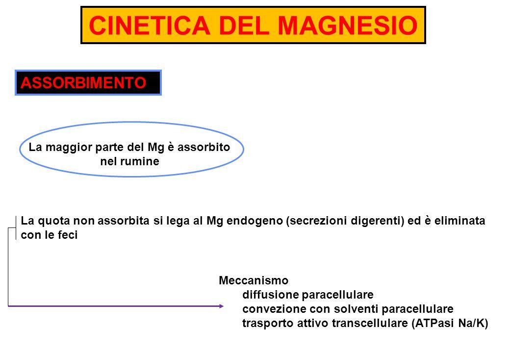 CINETICA DEL MAGNESIO La quota non assorbita si lega al Mg endogeno (secrezioni digerenti) ed è eliminata con le feci ASSORBIMENTO La maggior parte de