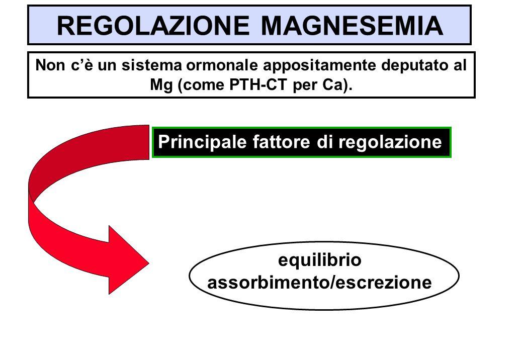 REGOLAZIONE MAGNESEMIA Non cè un sistema ormonale appositamente deputato al Mg (come PTH-CT per Ca). Principale fattore di regolazione equilibrio asso