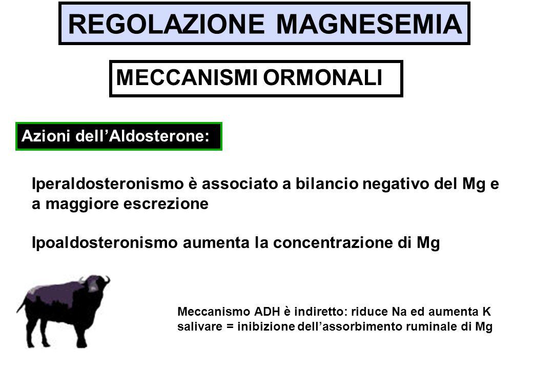 REGOLAZIONE MAGNESEMIA Iperaldosteronismo è associato a bilancio negativo del Mg e a maggiore escrezione Ipoaldosteronismo aumenta la concentrazione d