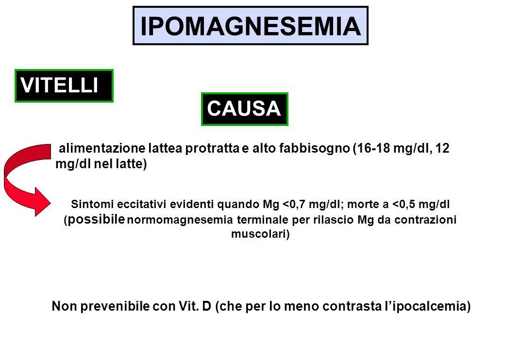 IPOMAGNESEMIA alimentazione lattea protratta e alto fabbisogno (16-18 mg/dl, 12 mg/dl nel latte) VITELLI CAUSA Sintomi eccitativi evidenti quando Mg <