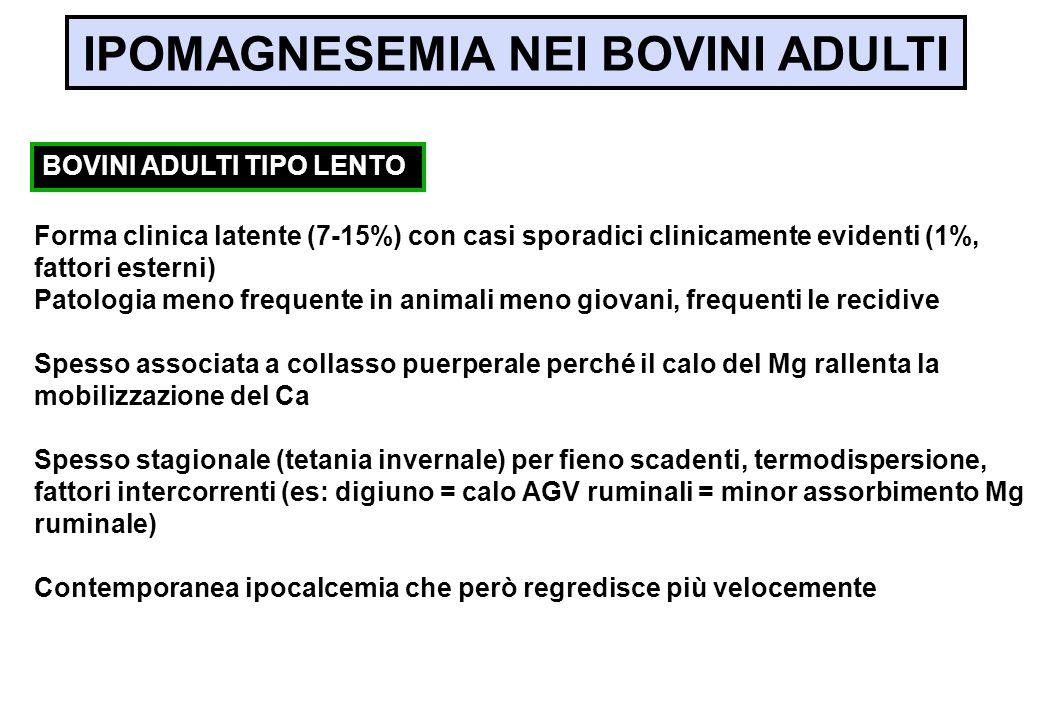 IPOMAGNESEMIA NEI BOVINI ADULTI Forma clinica latente (7-15%) con casi sporadici clinicamente evidenti (1%, fattori esterni) Patologia meno frequente