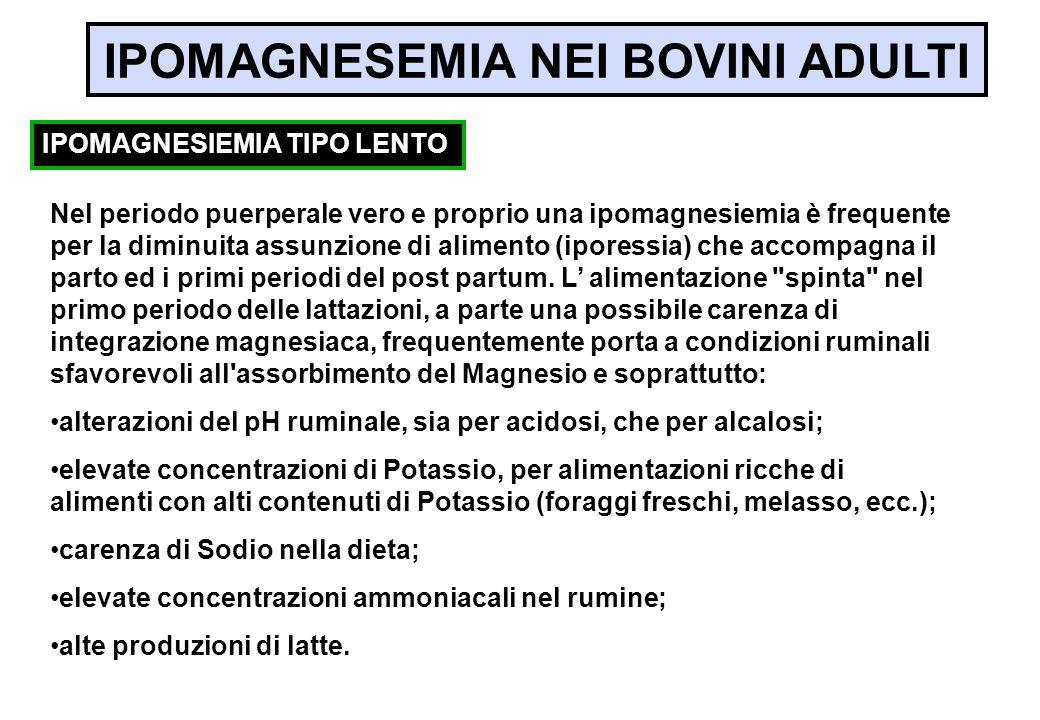 IPOMAGNESIEMIA TIPO LENTO Nel periodo puerperale vero e proprio una ipomagnesiemia è frequente per la diminuita assunzione di alimento (iporessia) che