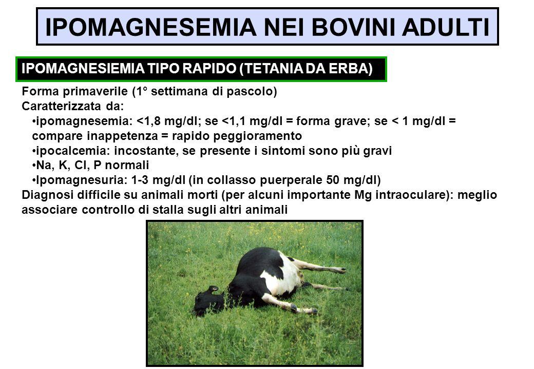Forma primaverile (1° settimana di pascolo) Caratterizzata da: ipomagnesemia: <1,8 mg/dl; se <1,1 mg/dl = forma grave; se < 1 mg/dl = compare inappete
