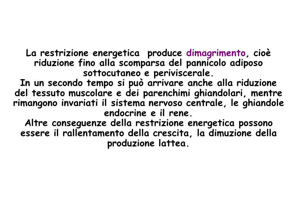 INTESTINALE = Mg endogeno (più alto in ruminanti) ed esogeno (aumenta in malassorbimento) ESCREZIONE RENALE = Per diffusione e convezione, riassorbimento nellansa di Henle Diminuisce per: diete povere di Mg, ipomagnesemie, PTH, CT, ADH, insulina Aumenta per: Ipercalcemia ipermagnesemia MAMMARIA = secrezione attiva (latte:concentrazione più alta che nel siero): 3-6 mg/Kg p.v./die = 2-4 g al giorno!.